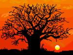 27_baobab_tree
